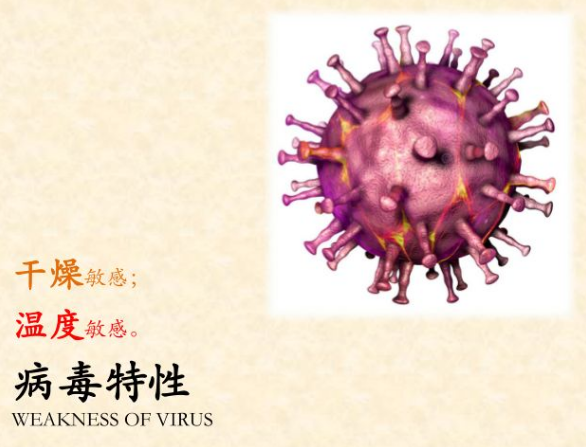 非洲猪瘟病毒的特性