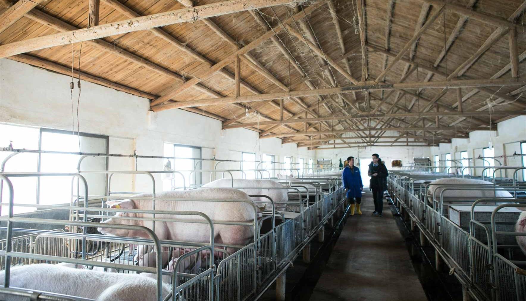 卵泡图像检测在母猪卵泡同步化控制研究中的应用