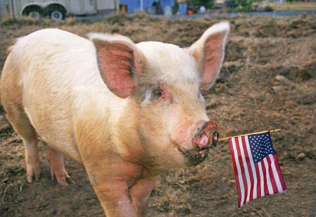 中企与美国成交相当规模的大豆和猪肉,关税威胁压抑着消费者