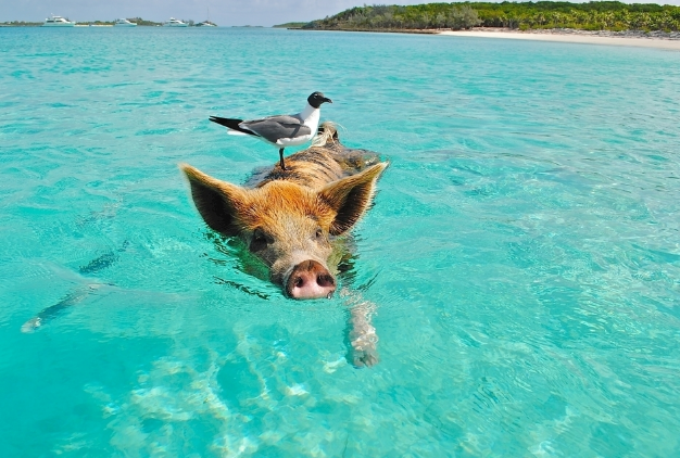9月26日全国生猪价格土杂猪报价表,今日猪价互有涨跌,涨幅和跌幅均可控