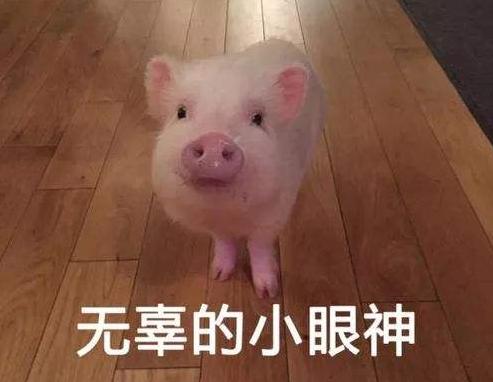 猪肉价格涨势趋缓,2019年国庆猪价将保持总体稳定