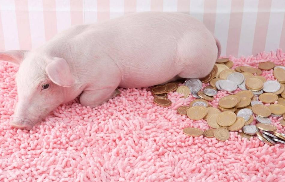 9月26日全国生猪价格涨势减缓,国庆期间猪价将保持稳定!
