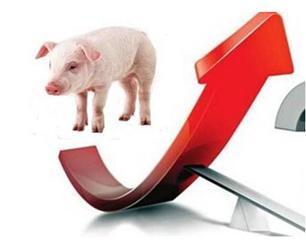 猪肉涨价为什么不靠进口平抑价格?单纯依靠进口难满足国内需求