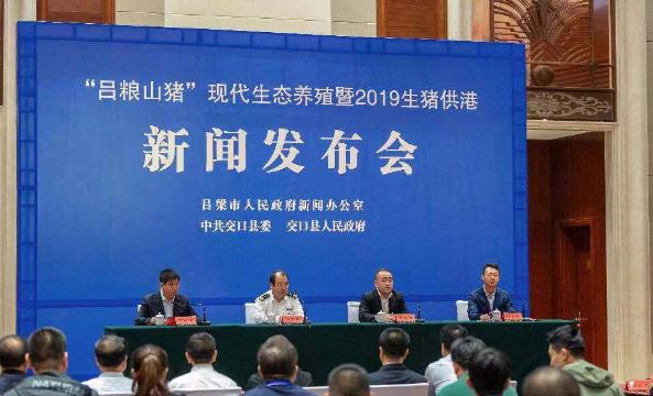 """现代生态养殖的""""吕粮山猪""""首供香港,香港上市当日被抢购一空"""