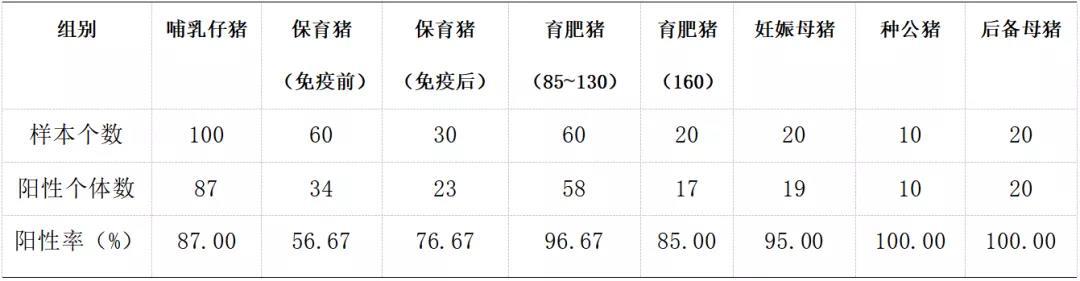 不同阶段猪血清中抗体检测