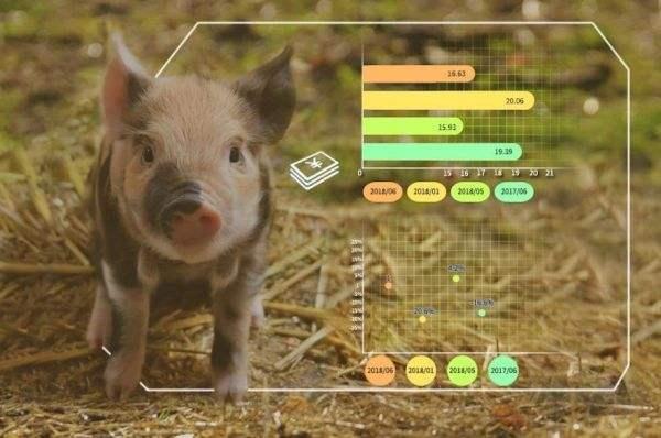 人工智能养猪是噱头还是黑科技?看完这篇文章就不用纠结了