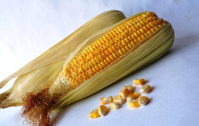 10月5日全国玉米价格行情表,最高报价区比最低价格区高出470元/吨