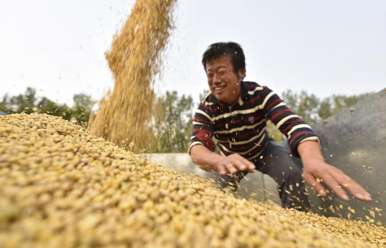 10月7日全国豆粕价格行情表,宁夏豆粕价格跌下神坛