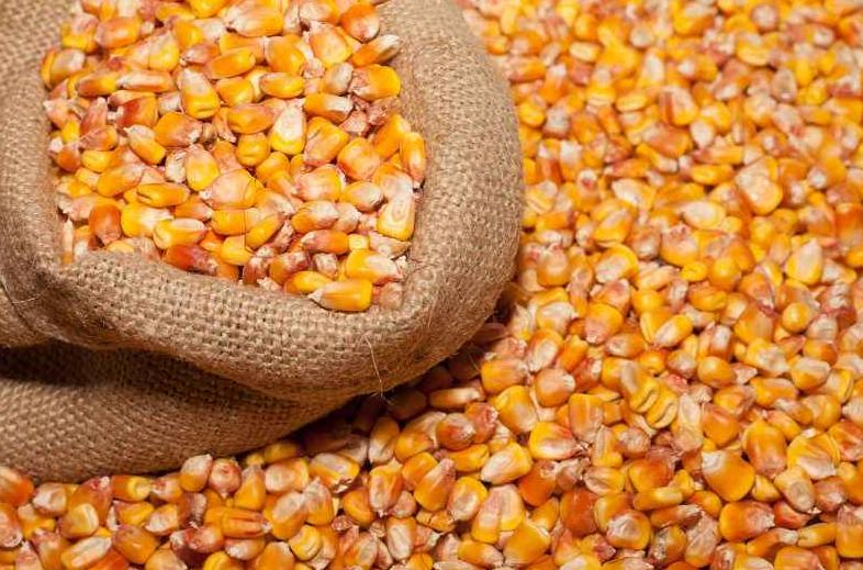 10月7日全国玉米价格行情表,玉米价格下跌区域增多