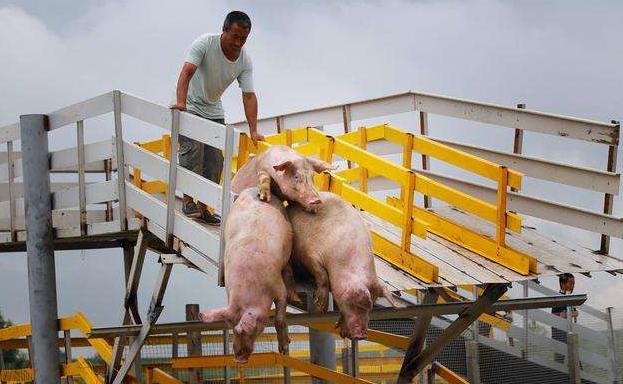一位基层养猪场老板所见所闻,血淋淋案例告诉你猪场复养有多艰难