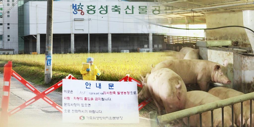 韩国非洲猪瘟蔓延 传播途径官方未有明确结论