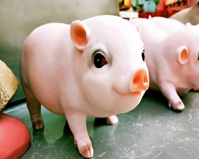 10月8日全国各省市仔猪价格报价表,猪肉涨价促进仔猪价格上涨