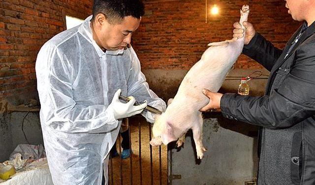 猪口蹄疫疫苗免接种几次最好有效?