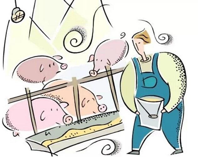 10月9日全国生猪价格外三元报价表,生猪价格日上涨幅度超1元/公斤