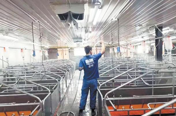 国家出台政策推动生猪规模化养殖,自动猪栏成养猪业网红新宠
