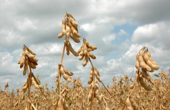 10月10日全国豆粕价格行情表,豆粕价格止跌,但短期内缺乏上涨动力