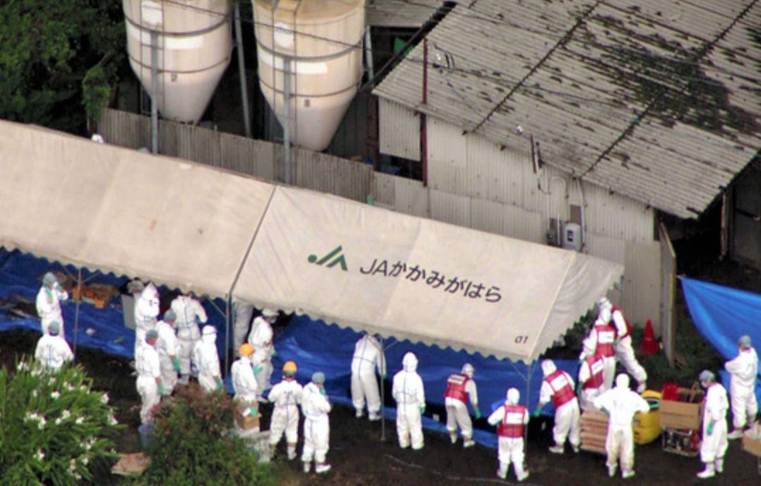 日本10县可接种猪瘟疫苗