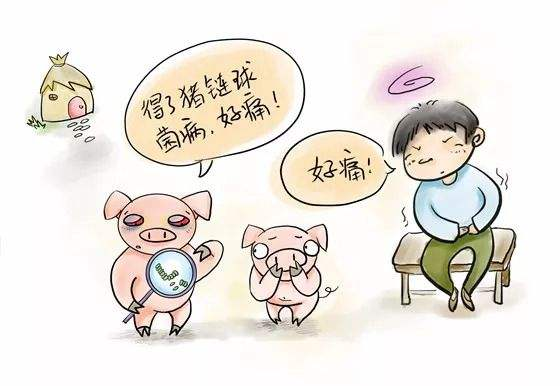 常见猪病防治口诀,熟练掌握自己也能判断猪病类型