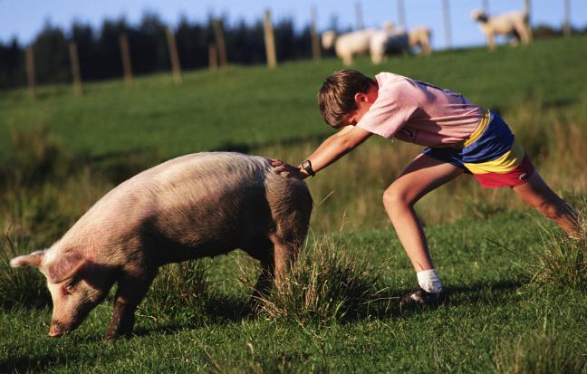 10月11日全国生猪价格土杂猪报价表,广东猪价每公斤34.86元