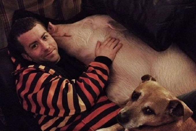 男子与猪相处融洽