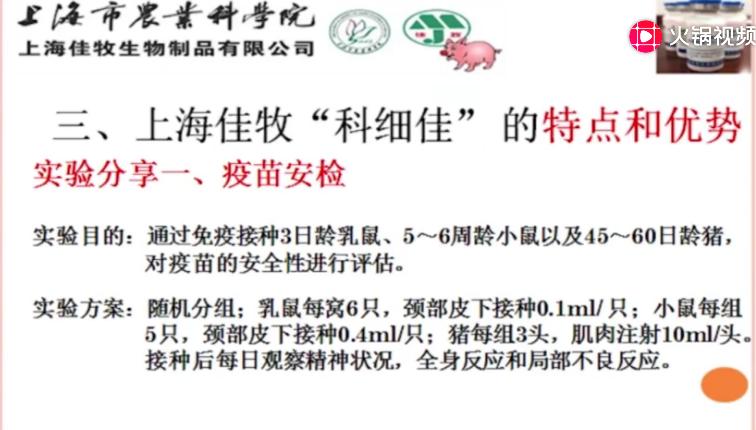如何有效防控猪细小病?猪细小病毒病的诊断与防控!