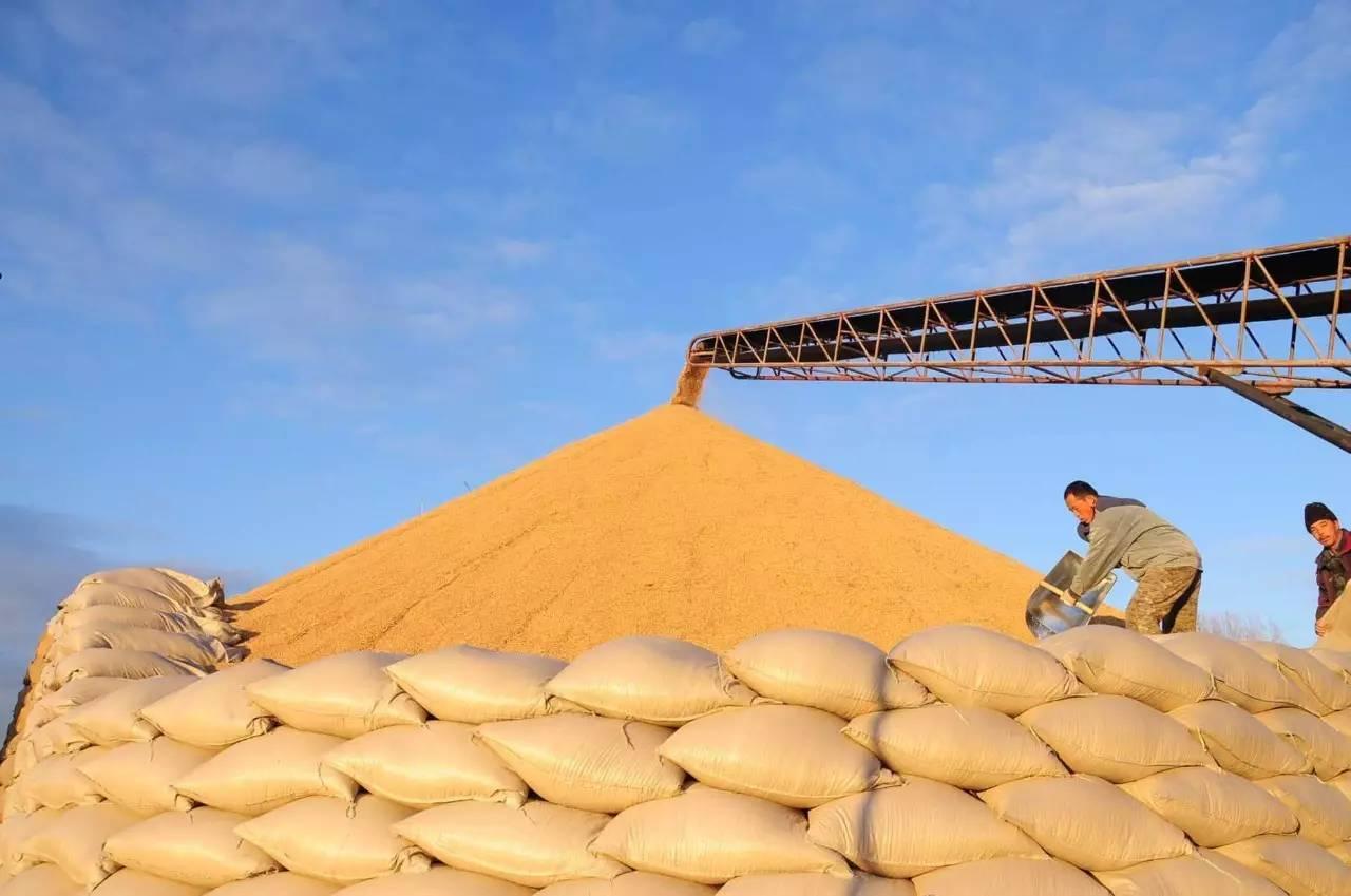 10月12日全国豆粕价格行情表,部分区域豆粕价格承压小幅回升