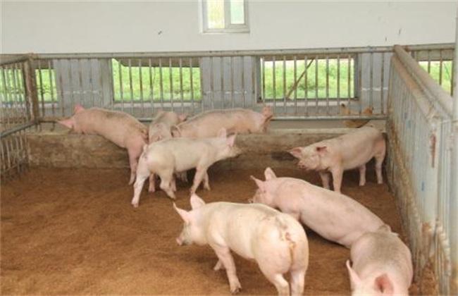 牧原股份单月赚10亿元,二师兄告诉你今年养猪、养鸡有多赚钱