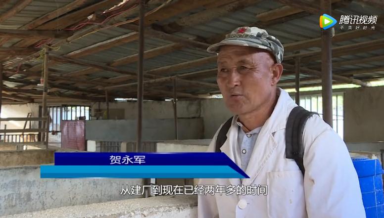 贺永军投资10多万余元走上了养猪致富路