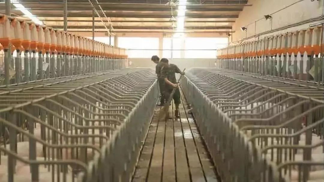 牧原股份:紧追温氏5年市值过千亿,实现沙漠里养猪!