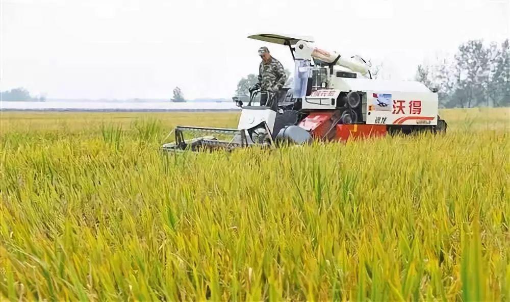玉米产量下降靠进口补缺,大豆80%依赖进口