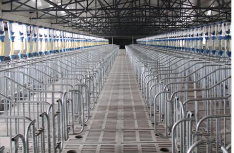 100头母猪的猪场,各猪舍到底需要多少栏位?