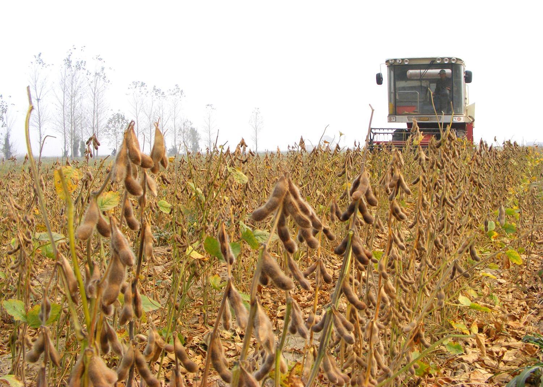 10月14日全国豆粕价格行情表,豆粕价格开始呈现回温走势