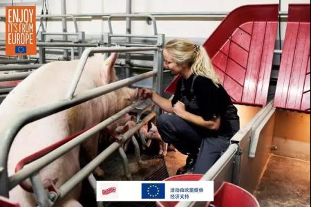 丹麦大学里的养猪专业,跟想象中的不太一样……