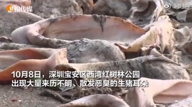 """1.2吨来历不明腐臭""""猪耳朵""""突现深圳沙滩,官方公布初步调查结果"""