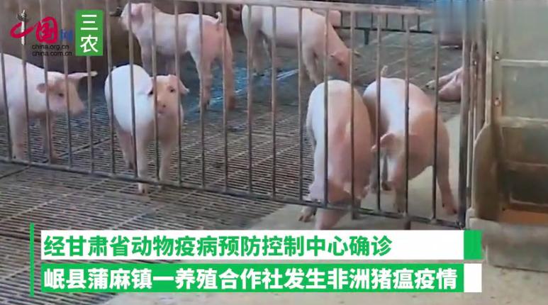 甘肃省岷县发生非洲猪瘟疫情