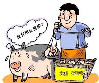 10月17日全国生猪价格,高位震荡调整,猪价由市场决定!