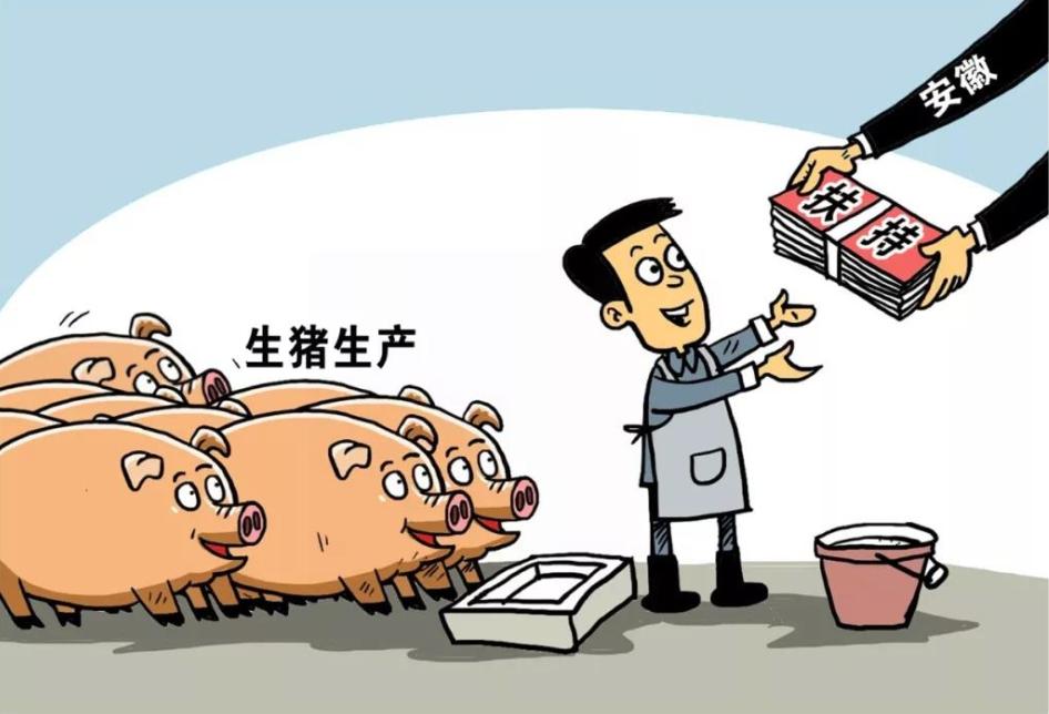 """目前市场行情""""有多少猪,猪贩子都收"""""""