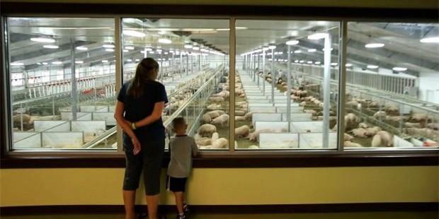 听课笔记 2 | 美国养猪业对非洲猪瘟预防、准备和控制