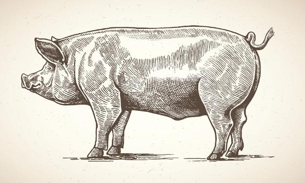 10月22日全国生猪价格土杂猪报价表,福建土杂猪价格破40大关