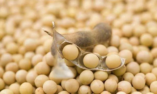 购买美国大豆通常是亏本生意 中国加大对巴西大豆的采购力度