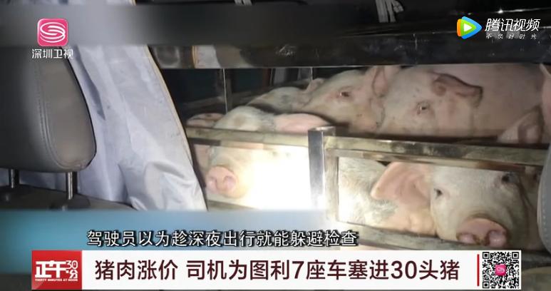 7座车塞进39头猪仔被查,司机:猪肉涨价了