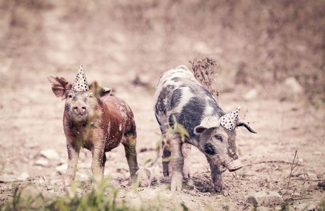 10月23日全国各省市仔猪价格报价表,多个地区仔猪价格涨至150元每公斤