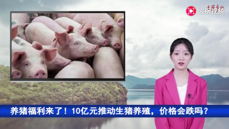 养猪福利来了!10亿元推动生猪养殖,价格会跌吗?