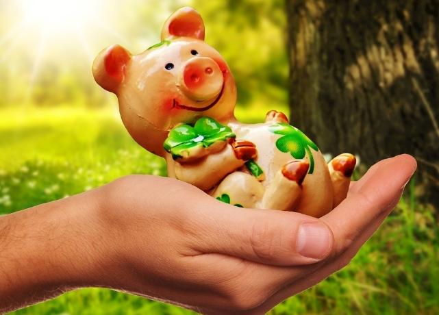 10月25日全国生猪价格外三元报价表,超半数省市地区猪价止涨转跌