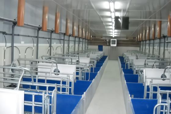 """哈萨克斯坦将华出口10万吨猪肉 养猪业得到""""复兴"""""""