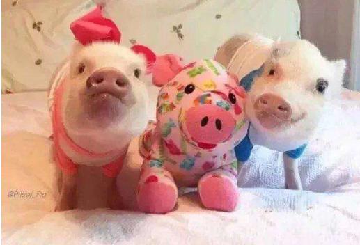 10月27日全国生猪价格,高猪价抑制消费,又有10万吨进口肉