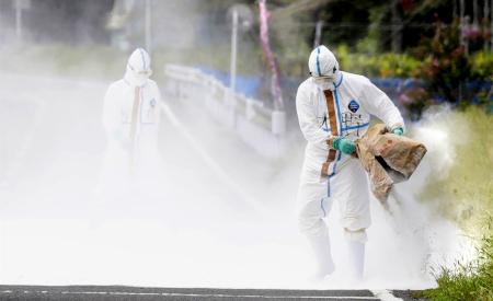 日本多地机场接连在旅客行李中检测出非洲猪瘟病毒