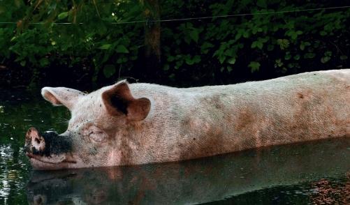 10月28日全国生猪价格内三元报价表,福建单日涨幅达1.22元每公斤
