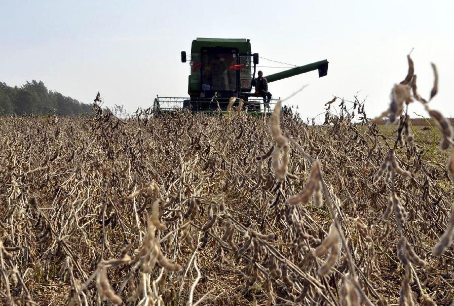 10月29日全国豆粕价格行情表,豆粕价格较上月同期普遍上涨