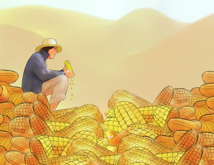 10月30日全国玉米价格行情表,宁夏玉米价格日跌幅最大